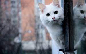 Падение кошки с высоты | мои домашние питомцы