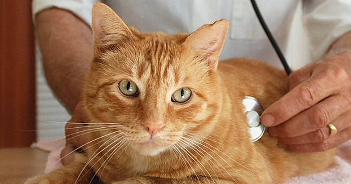 Нефрит у кота лечение - муркин дом
