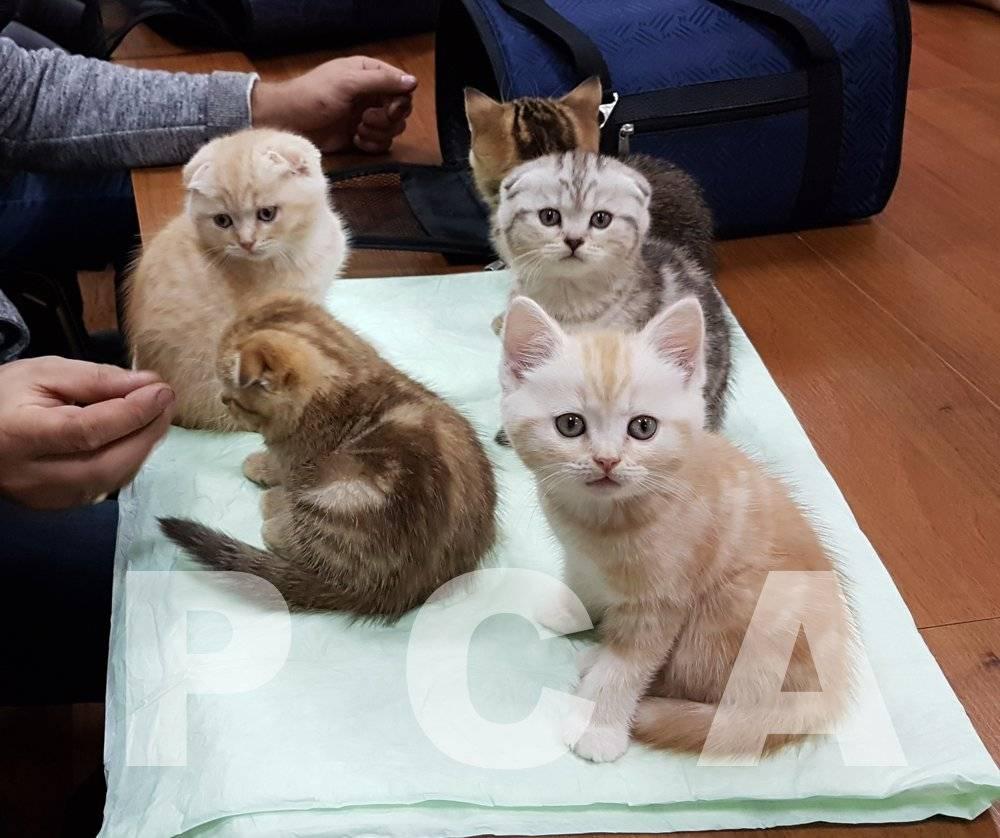 Как лучше начать разводить кошек
