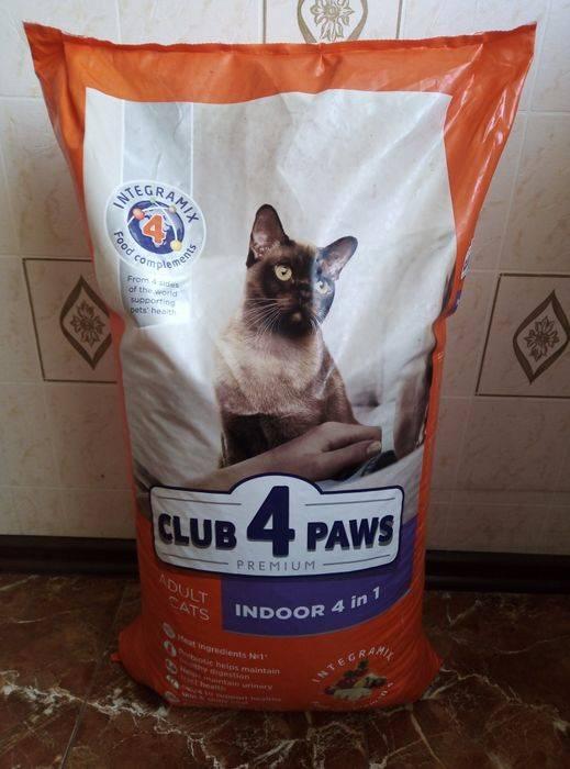 Как правильно вычесывать кота? частота процедуры и вспомогательные средства