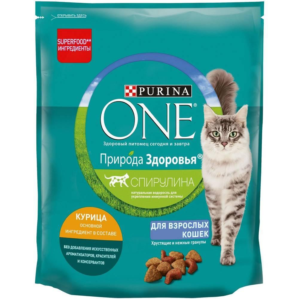 Какой сухой корм лучше подойдет для кошек