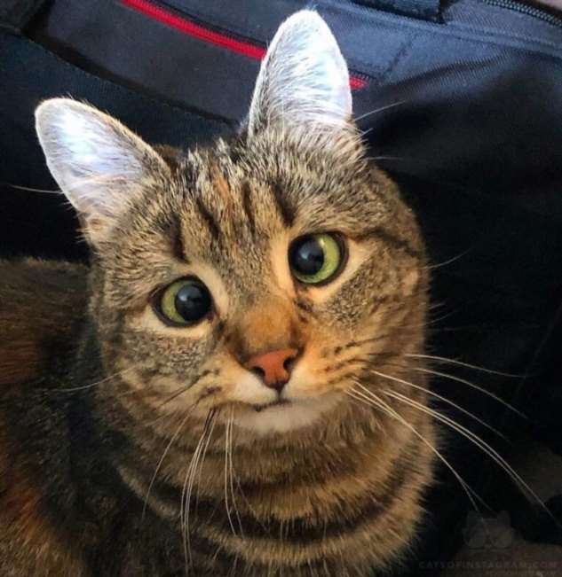 Почему у котенка текут глаза, коньюктивит у котенка, фото, причины и лечение, (как вылечить котенку глаза, лечение глаз у котят)