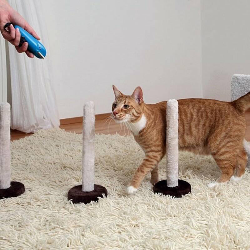 Как научить кошку командам?