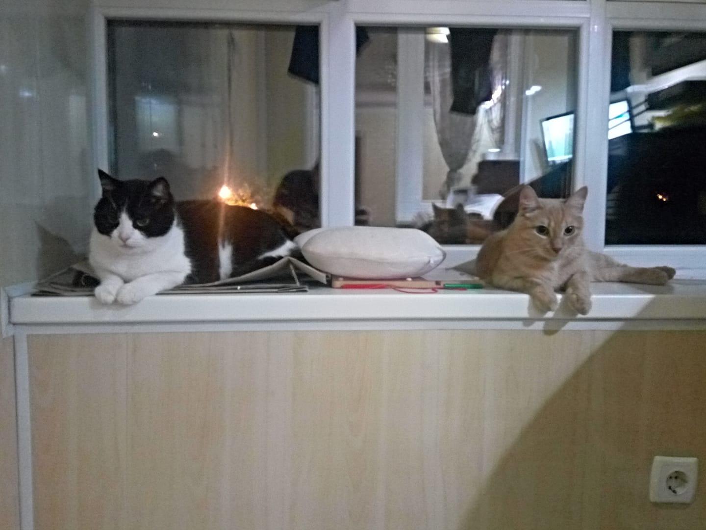 Из чего делают корм для кошек