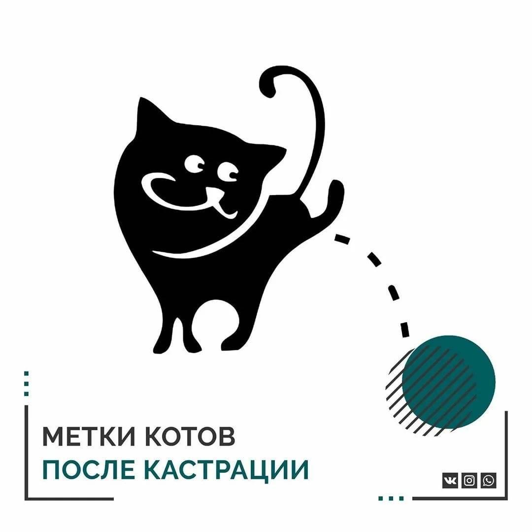 Что делать, если кастрированный кот метит в домеветлечебница рос-вет