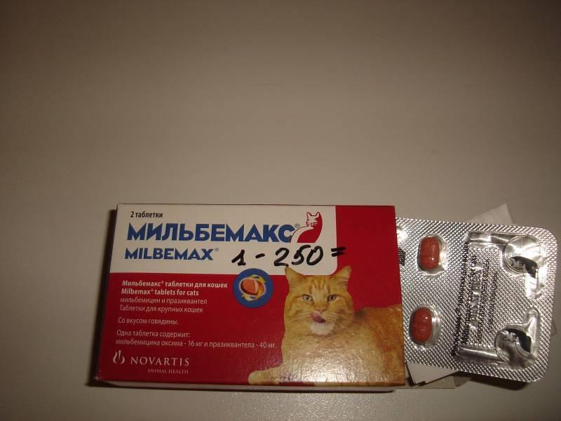 Мильбемакс от глистов: способы применения у собак и кошек, эффективность