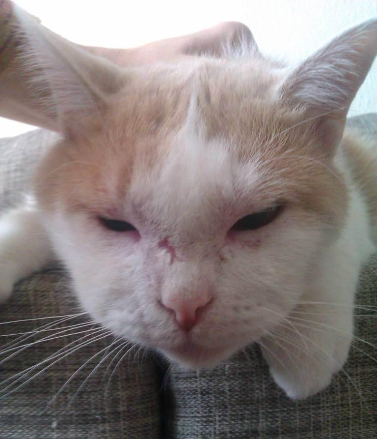 Что делать, если кошку укусила оса?