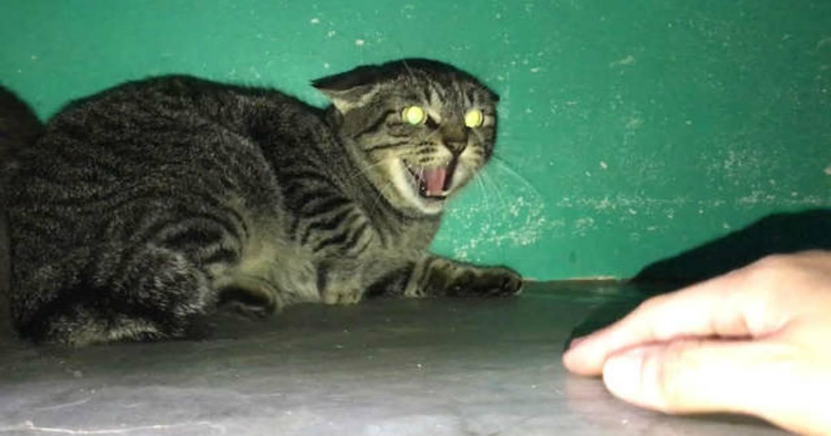 Кот или кошка шипит на хозяина - что делать?