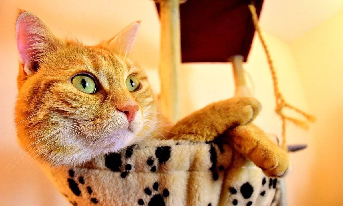 Рыжий кот: приметы и суеверия