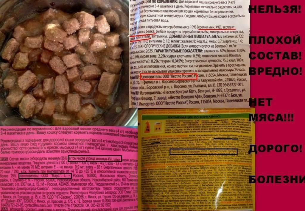 Куриный бульон при болях в желудке. куриный и говяжий бульон, польза и вред. о секретах приготовления вкусного бульона