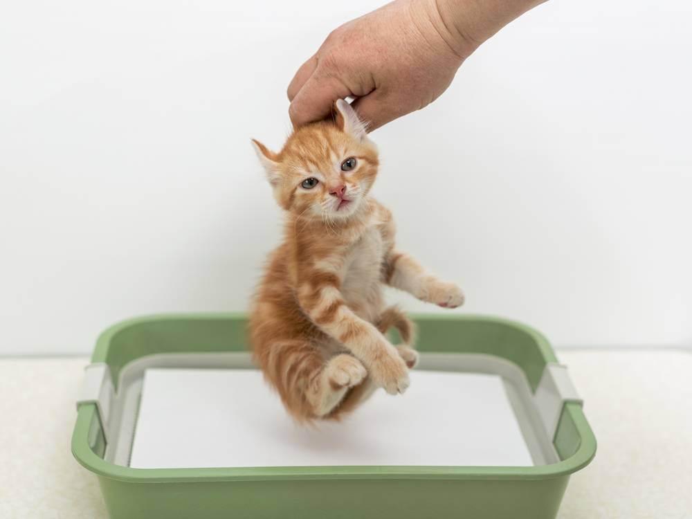 Как отучить кота срать где попало: почему и что можно сделать в таком случае