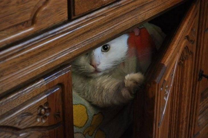 Как найти потерявшегося кота