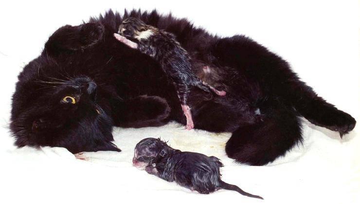 Окситоцин для животных — инструкция по применению в ветеринарии
