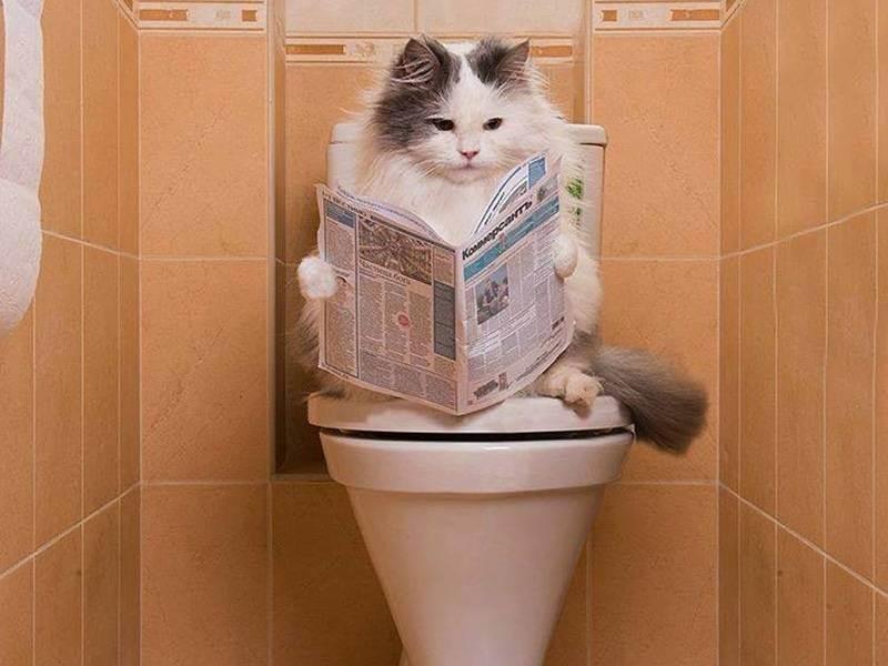 Почему котенок мяукает когда ходит в туалет?   zdavnews.ru