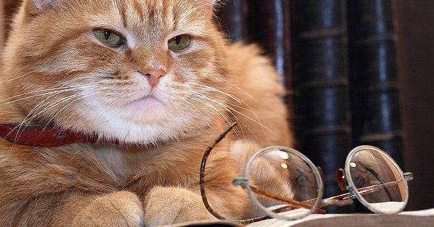 Интеллект котов