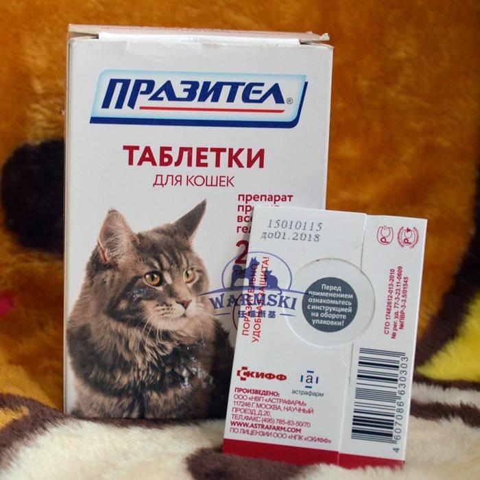 Средство от глистов для котят: описание антигельминтных препаратов, как давать