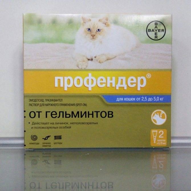 Препараты от глистов для котят, щенят и взрослых животных. автор ветеринар