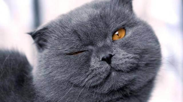 Кто они — гипоаллергенные кошки?