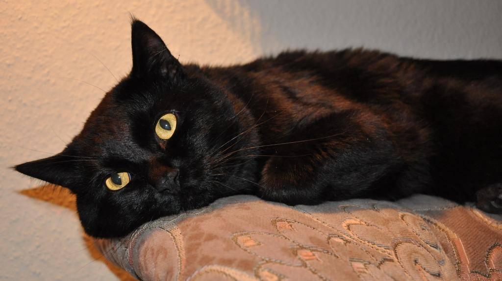 Кошка серого цвета