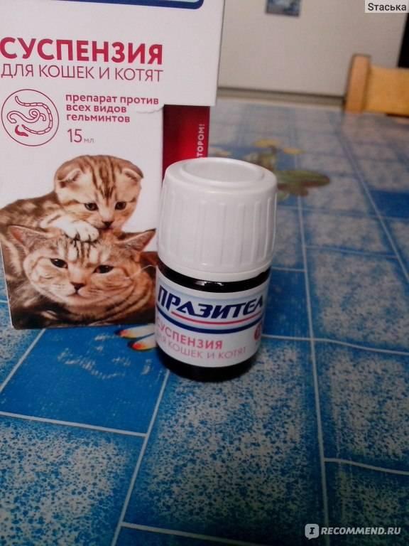 Как дать коту таблетку от глистов: видео, как скормить кошке таблетку