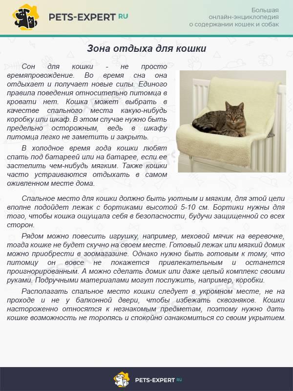 Почему кошка постоянно гадит на постель?
