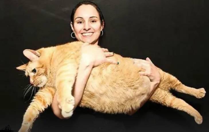 Самые жирные кошки в мире   интересный сайт