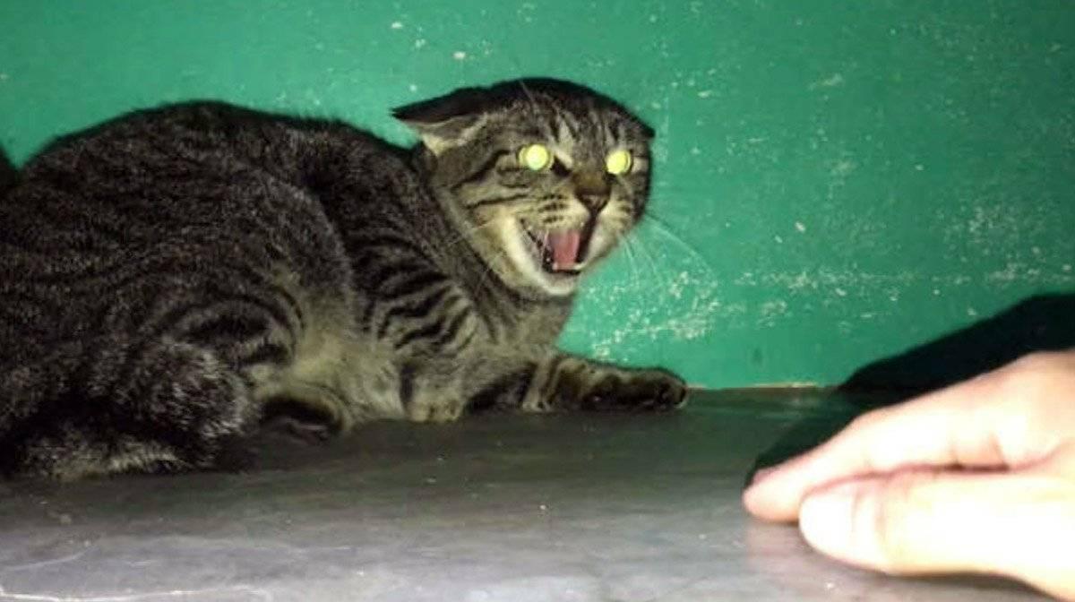 Почему кот орет и прыгает на стену - кошки и собаки простыми словами