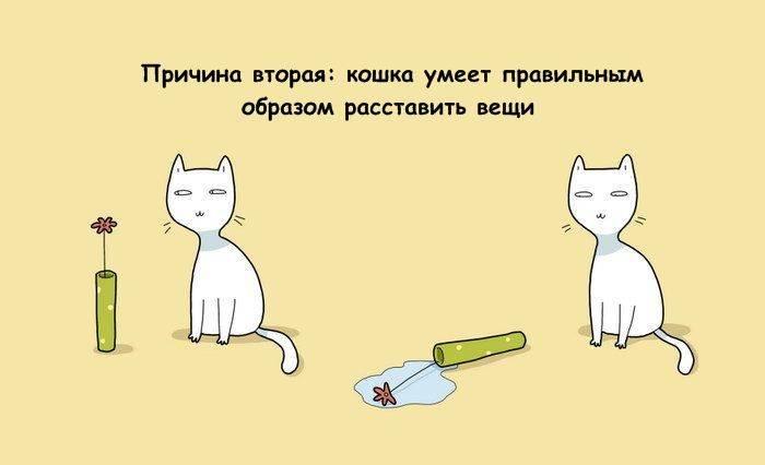 Кошка доме плюсы и минусы. кошка в доме: плюсы и минусы