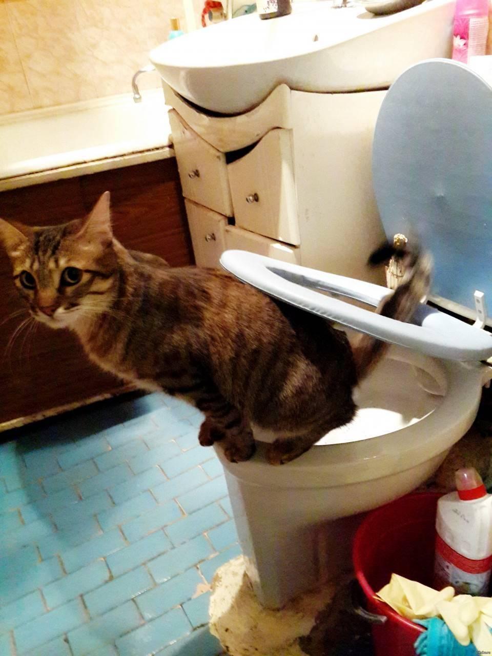 Частое мочеиспускание у котов