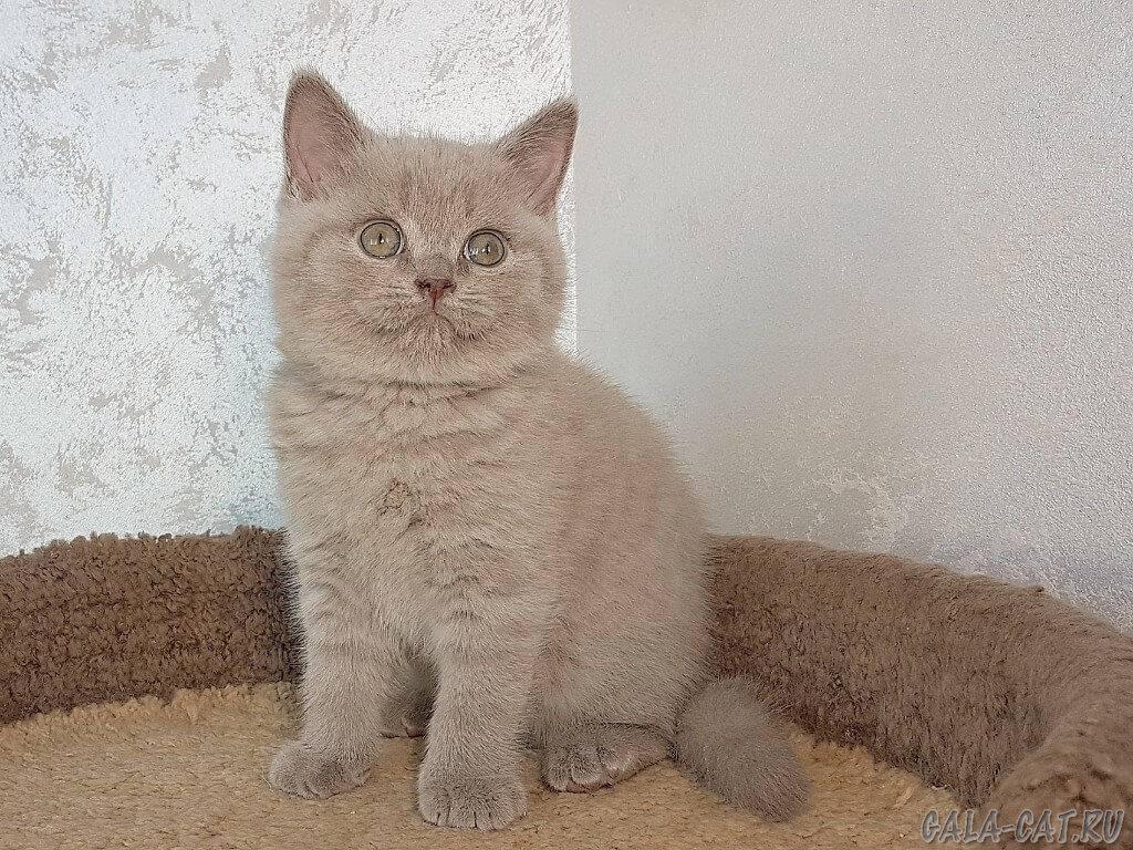В каком возрасте кастрируют котов: степень последствий в каком возрасте кастрируют котов: степень последствий