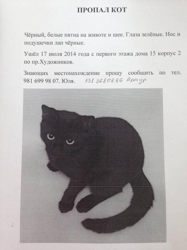 Что делать, если потерялась кошка