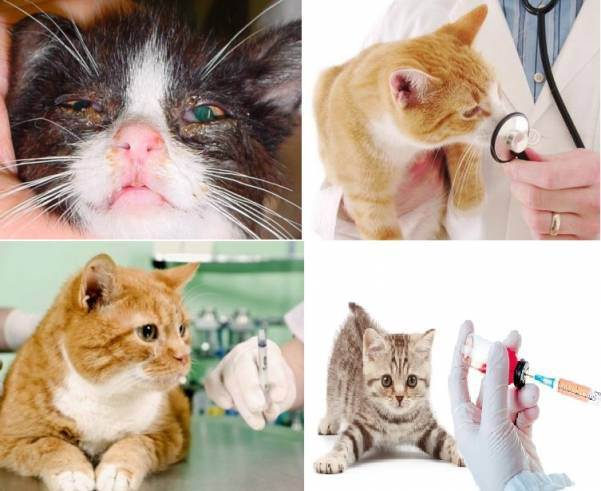 Можно ли заразиться токсоплазмозом через царапину кошки