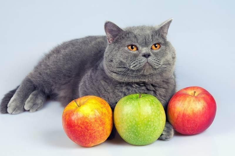 Варианты кличек для мальчиков котов (всех пород) | кот и кошка