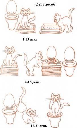 Как правильно дрессировать домашнего кота