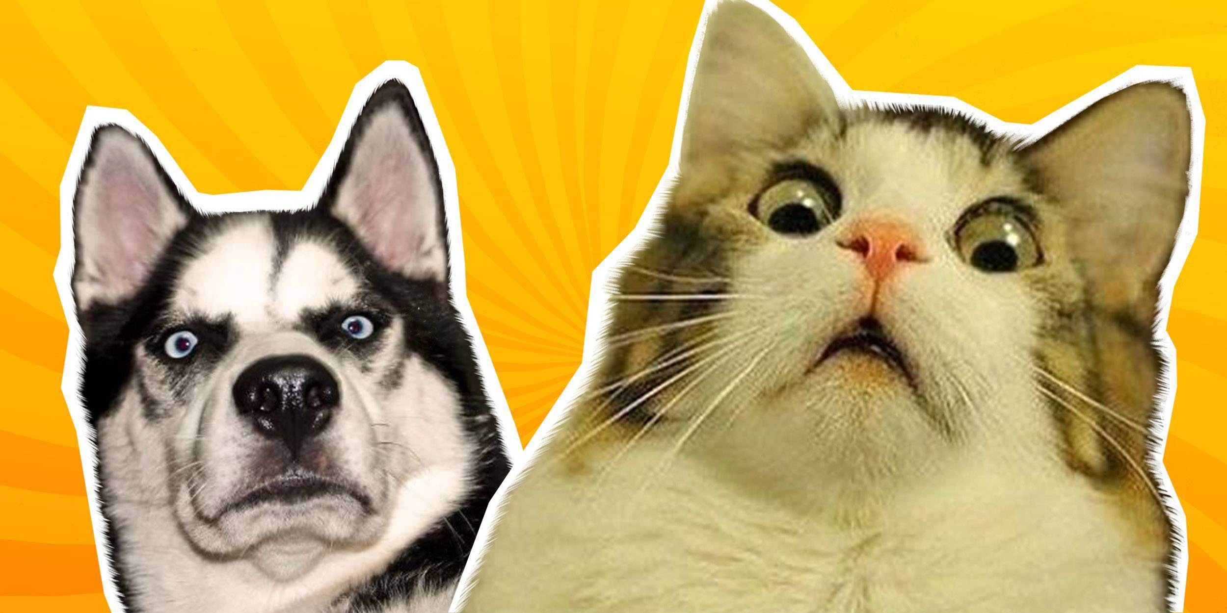 Помощь кошке: тепловой удар у кошки
