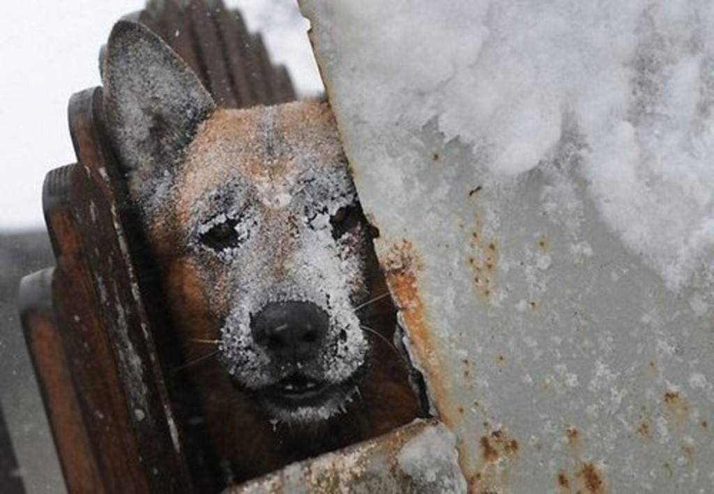 Мерзнут ли кошки зимой на улице - какой мороз выдерживают