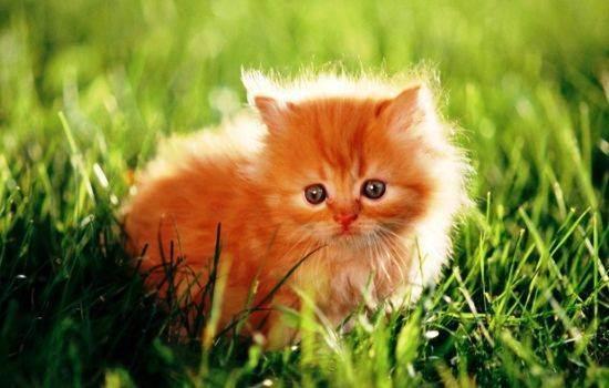 Как назвать рыжего кота мальчика или девочку прикольно?