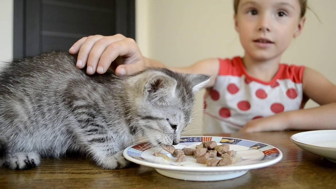 Можно ли давать котятам сухой корм
