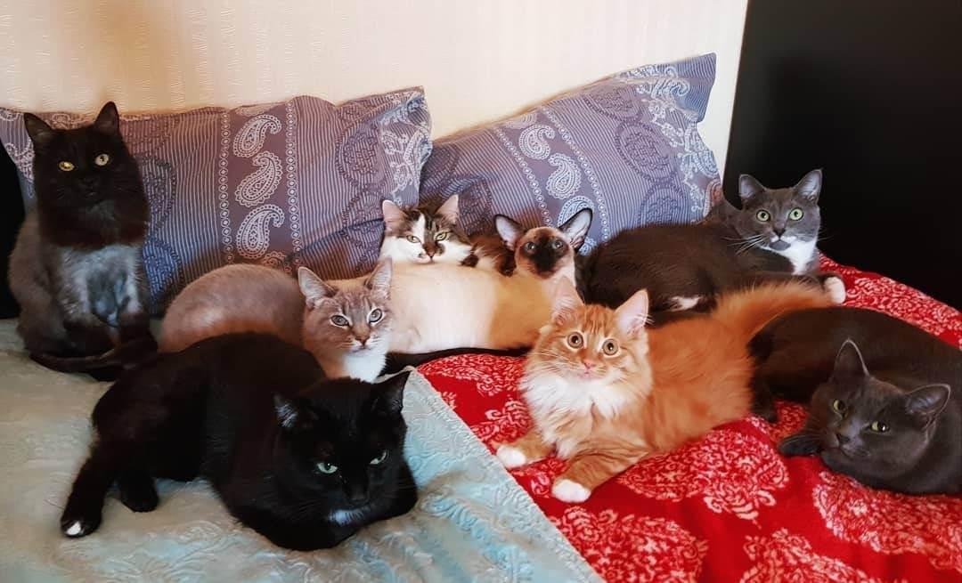 Уборка в доме, где живет кошка