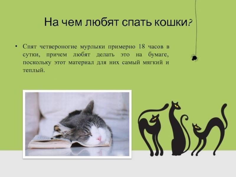 Сколько спят коты часов в сутки: рассмотрим в общих чертах