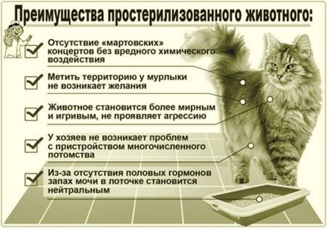Понос у кошки после стерилизации или она не ходит в туалет по-большому – что делать?