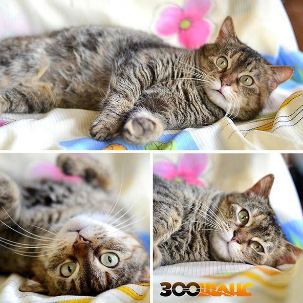 Слишком ласковый кот)))/ добавила фото - страна мам
