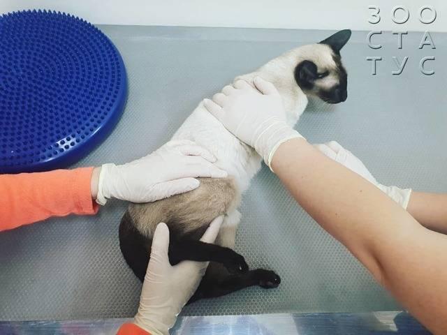 Отказали задние ноги у кота. 16 возможных причин от ветеринара