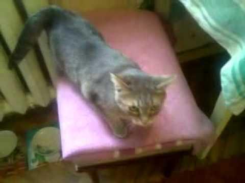 Примеры что делать если кошка начала просить кота: народные средства для успокоения