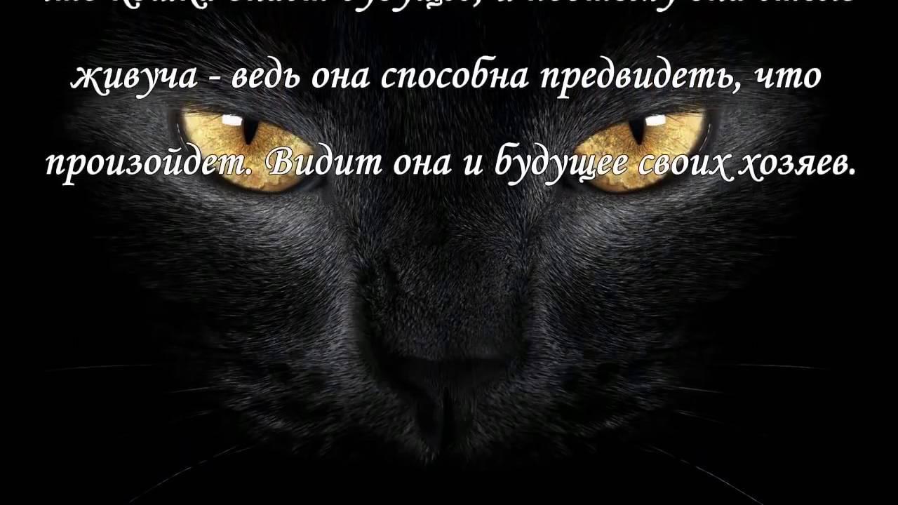 Почему кошкам нельзя смотреть в глаза. список всех причин