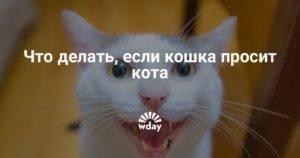 Кошка гуляет: как успокоить животное во время течки