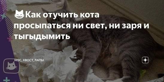 Кошка гадит на диван – как отучить животное от привычки и вывести неприятный запах с мебели
