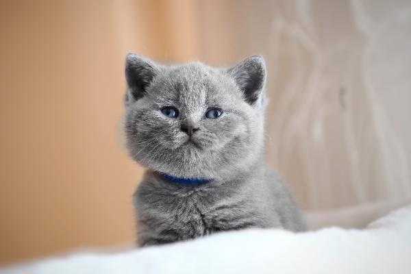 Чем кормить кота в домашних условиях? рацион питания взрослого кота: советы ветеринаров