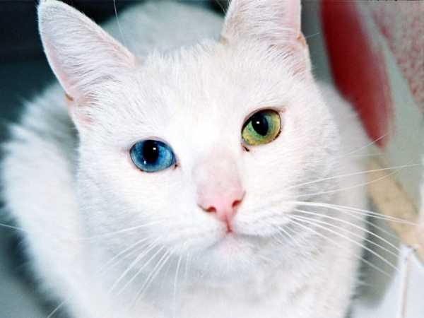 Приметы и суеверия о кошках в доме