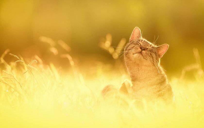 Тепловой удар у кошек симптомы и что делать